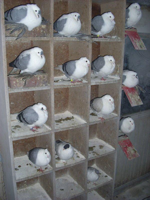 quelques photos du pigeonnier à la tombée du jour, chacun regagne sa place