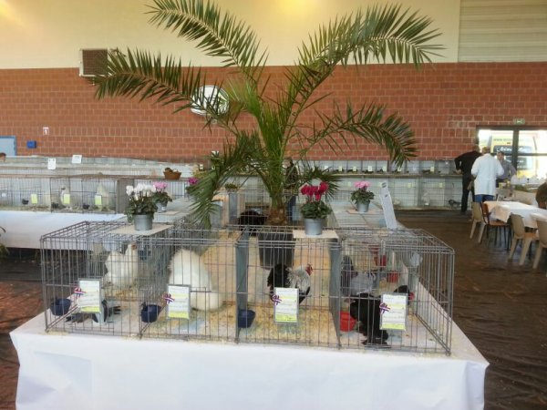 Salon international d aviculture 25 et 26 octobre 2014