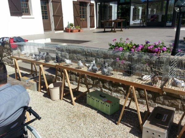 Journée technique de la section nord du club du pigeon cravaté le samedi 29 Août 2015 chez stephane Mabic