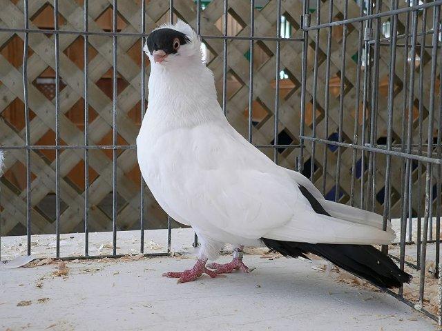 Blog de le-pigeonnier-de-laulau
