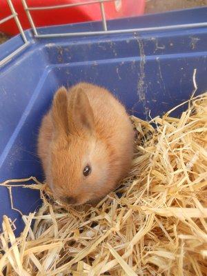 et notre petite lapine: Suna