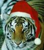 Tigres68