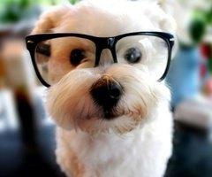 Petit chien.