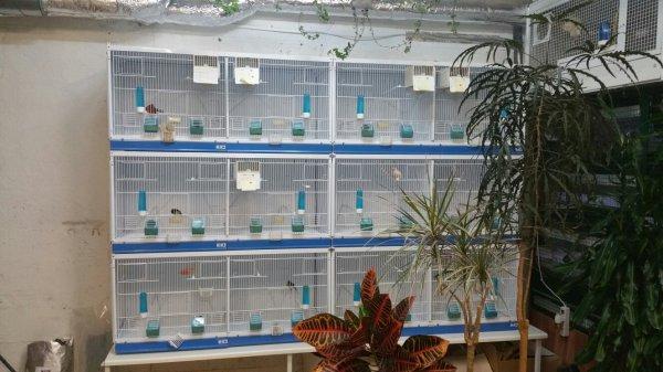 Enfin  prêt pour la  reproduction  je viens de recevoir  le nouvelles  cages