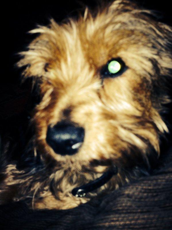 Le chien de ma patate, est ce que c'est saten ? et il diabolique ?