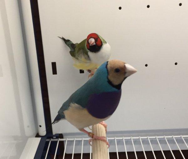 Quelques sujets venant de chez sylvain! De bons oiseaux pour redémarrer