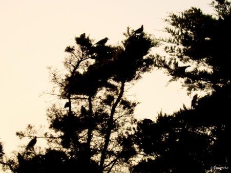 La fibromyalgie - Au fil des jours (12/09/14)