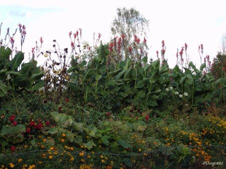 La fibromyalgie - Au fil des jours (09/10/14) - (Fin)