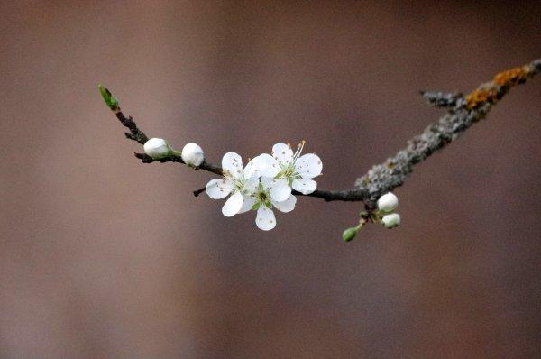 Sois comme la fleur, épanouis-toi librement et laisse les abeilles dévaliser ton coeur !