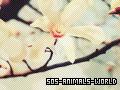 Photo de SOS-Animals-World