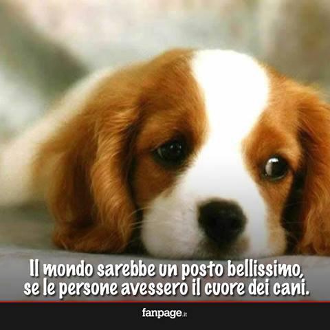 Il mondo sarebbe un posto bellissimo, se le persone avessero il cuore dei cani.