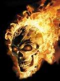 Photo de firely-skull