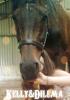 Opaline-Cabalo