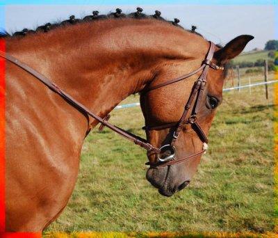 Honneur a ce cheval en or parti bien trop tôt !