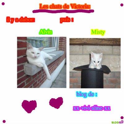 les chat de Victoria,Ils sont aussi trop mimi!!!!(l) (l)