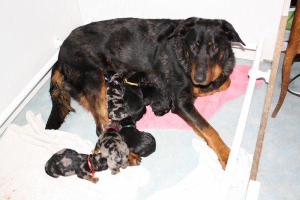 Les bébés sont nés