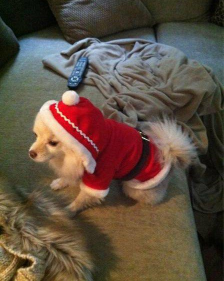 Daisy chien a kelly kelly mon modèle.