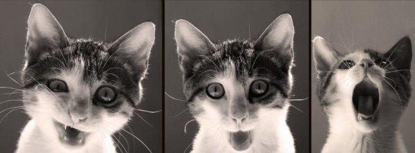 J'ai eu des chatons ?! NAAAN *o*