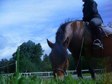 Etre aimé par un cheval doit nous remplir d'humilité et de reconnaissance, car nous ne le méritons pas.