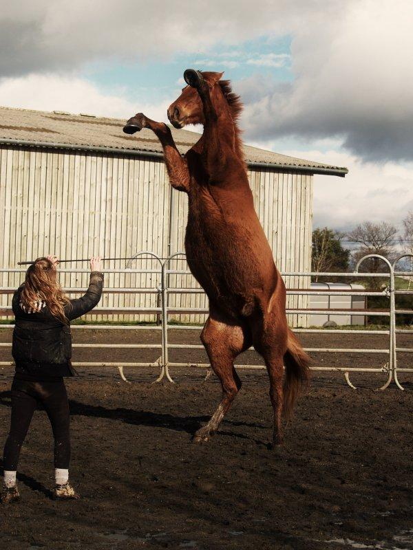 """[єℓℓє]   """"Le cheval est la projection des rêves que l'homme se fait de lui-même : fort, puissant, beau, magnifique."""" ..."""