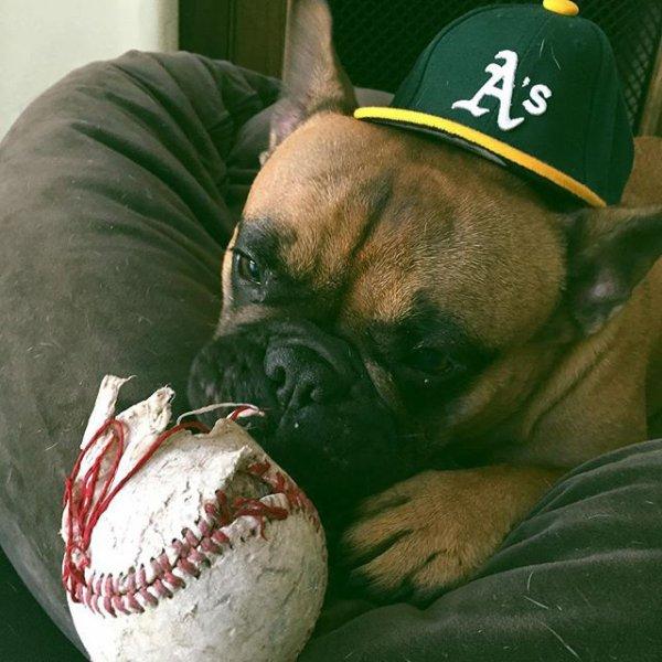 Mojo et sa balle de baseball trop cute <3