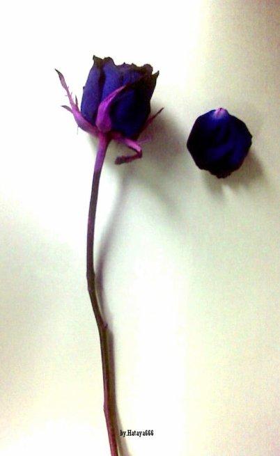 -------------------------------------------wilted flower -----------------------------------------