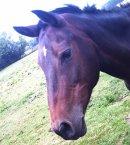 Photo de matos-equitation-z