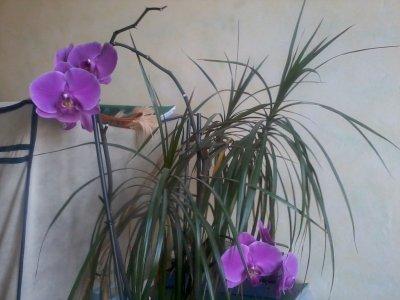 LES PLANTES DE MA CHAMBRE : LES TROPIQUES CHEZ MOI