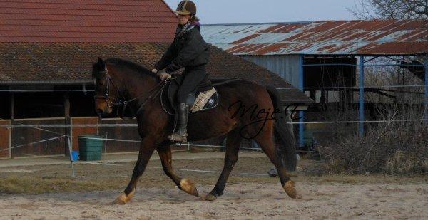 Meje Equilibre ℓe cheval a la perception comme iℓ α ℓα sensation, ℓα comparaison et ℓe souvenir. Iℓ α donc ℓe jugement et ℓα mémoire. Iℓ α donc ℓ'inteℓℓigence. ♥ Meje Equilibre