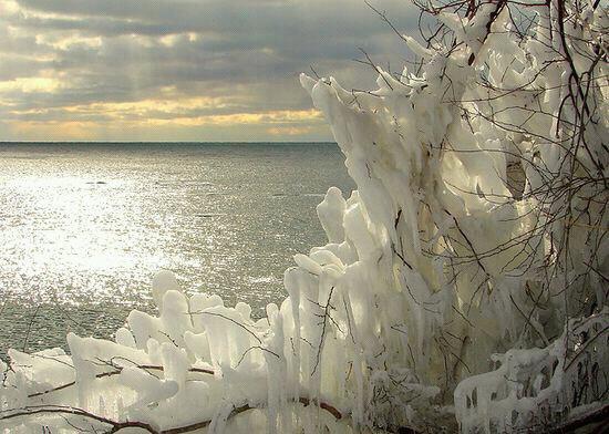 Magnifique photo d'hiver