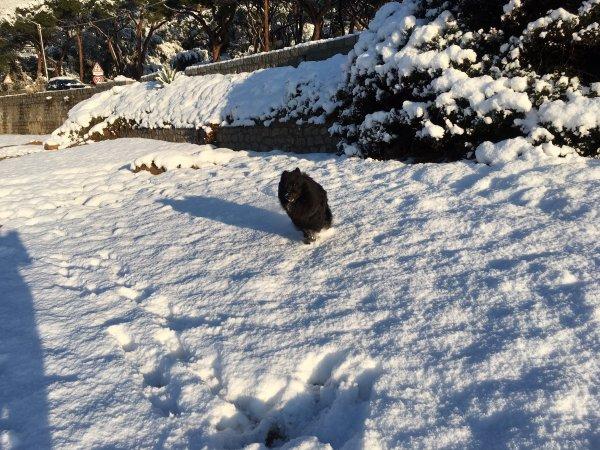 neige sur la Corse