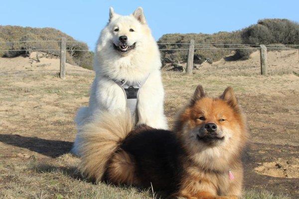 Kitsune et ses amis