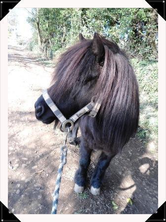 """""""Le cheval est une créature mystérieuse ou divine """""""