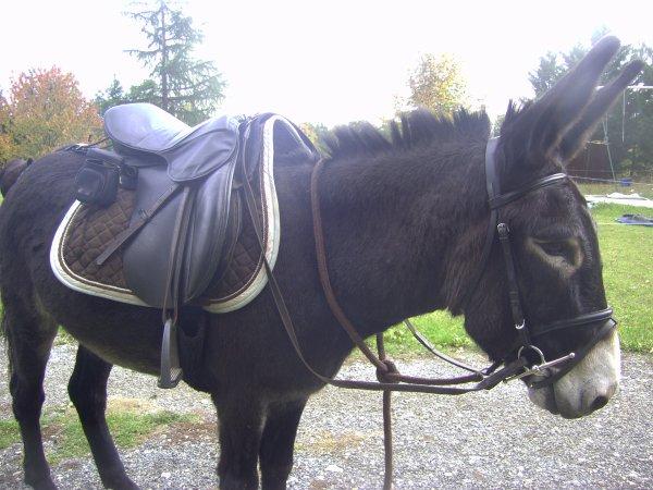 Affaires d'équitation