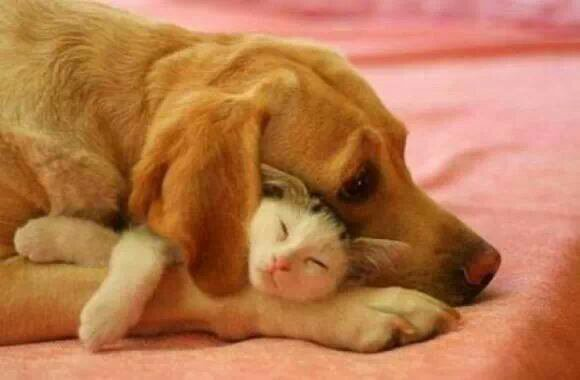 C mignon entre chien et chat!
