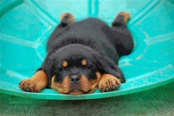 Je suis tellement paresseux!  :)