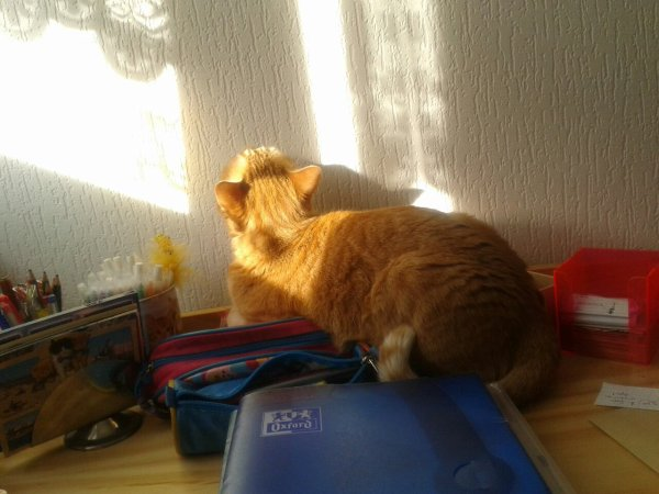 Voilà mon chat :)