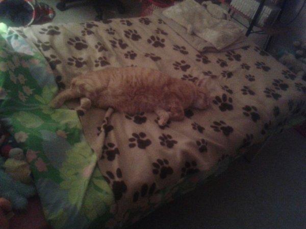 Voilà mon chat! :)