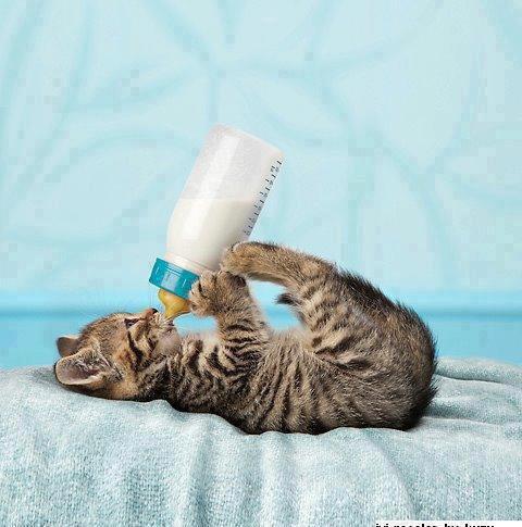 Comment faire avaler une pilule a un chat humour - Retour de couche quand reprendre la pilule ...