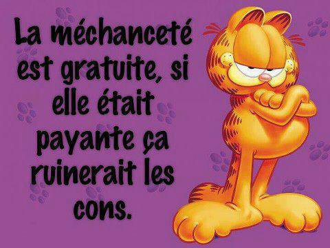 MECHANCETE  VUE  PAR  LE  CHAT !!