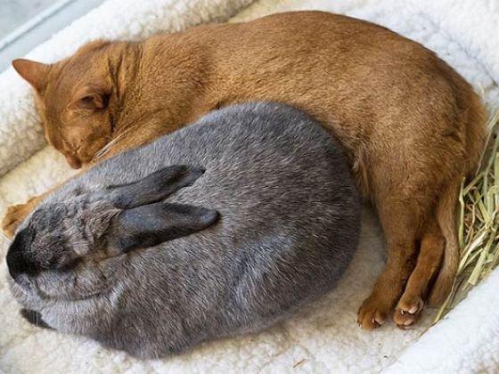 Adoptés dans un refuge, un lapin et un chat deviennent meilleurs amis