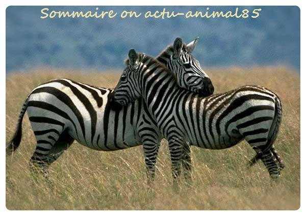 Sommaire on actu-animal85