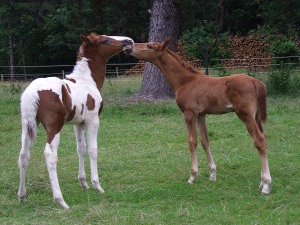 les bébés 2012 au complet