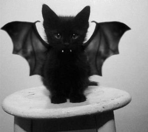 petit démon