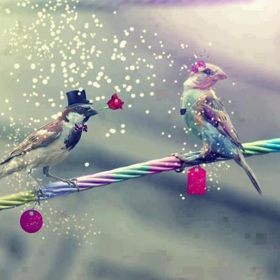 Petit oiseaux d'amour