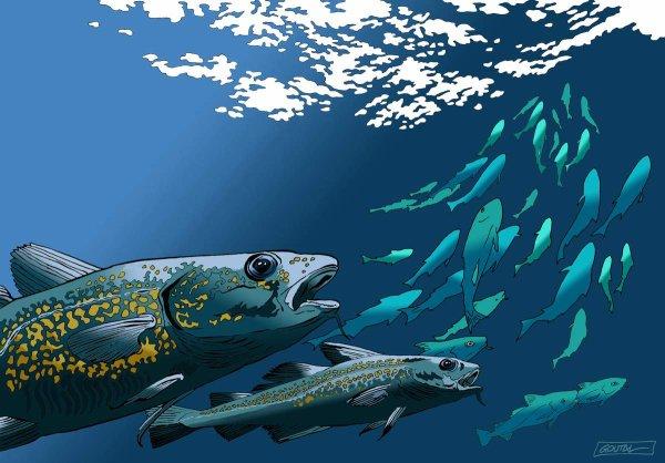 """Spécial """"Journée nationale des pêcheurs à la ligne..."""" - Image n° 2/2 !..."""