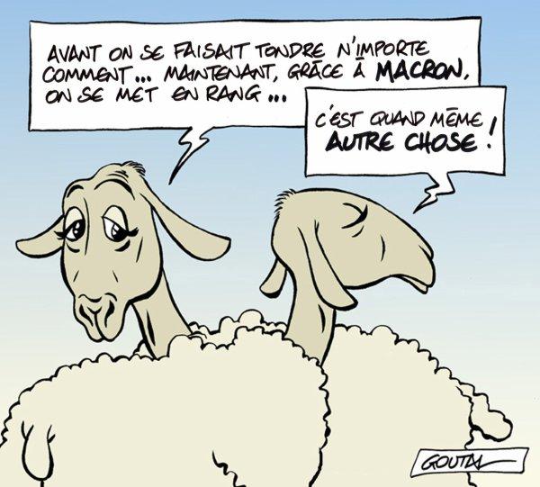 """Spécial """"Les moutons de Panurge, """"EN MARCHE""""..."""" - Image n° 3/3 !..."""