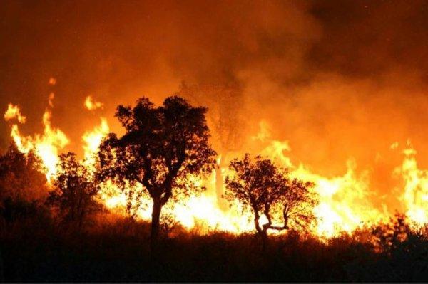 """Spécial """"Algérie : une centaine d'incendies, 1.000 ha de forêts détruits en 48h..."""" - Image n° 1/2 !..."""