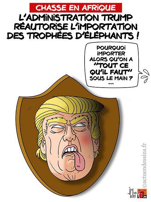 """Spécial """"USA : ré-autorisation d'importer des trophées d'éléphants !..."""" - Image n° 3/3 !..."""