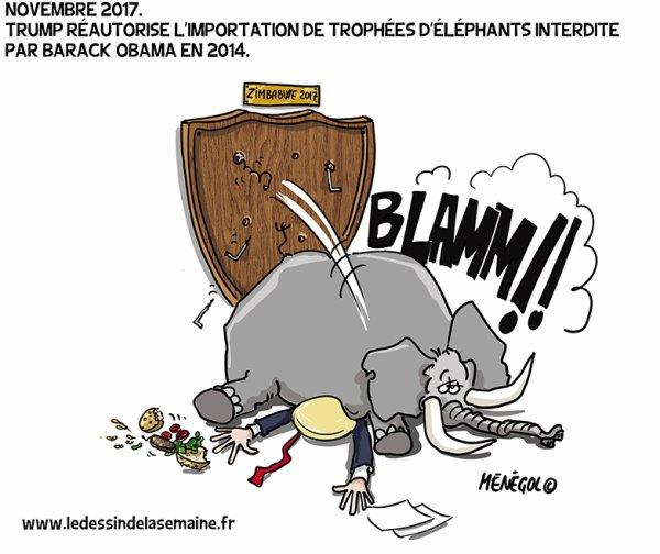 """Spécial """"TRUMP SON MONDE et le """"feuilleton"""" sur les éléphants.."""" - Image n° 2/3 !..."""